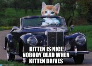 nwcgb-kitten